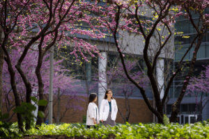 Medical students in Hope Plaza on the Medical Campus during spring